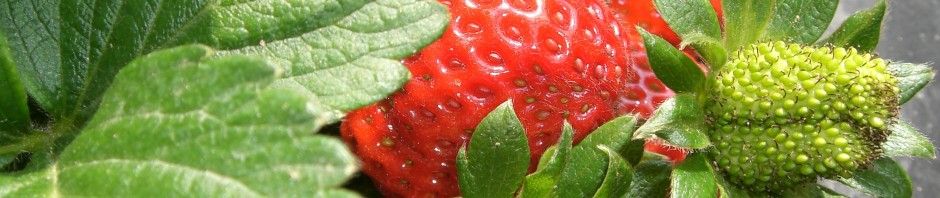 Fruit Strawberry